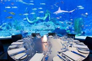 BUSET SPESIAL VALENTINE - KEGIATAN UNIK 1 melbourne sea life