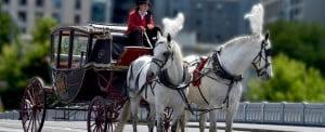 BUSET SPESIAL VALENTINE - KEGIATAN UNIK 2 melbourne horse carriage